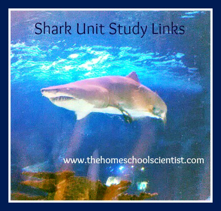 shark unit study links