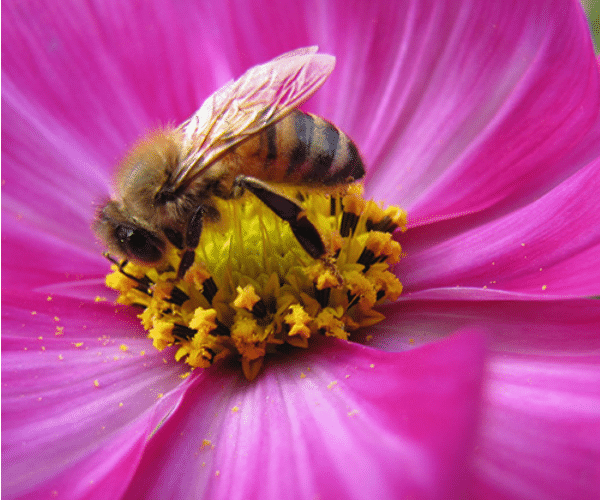 Studying bees in your backyard